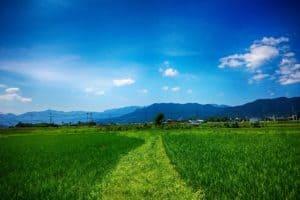 Jaapanisse riisipõllule
