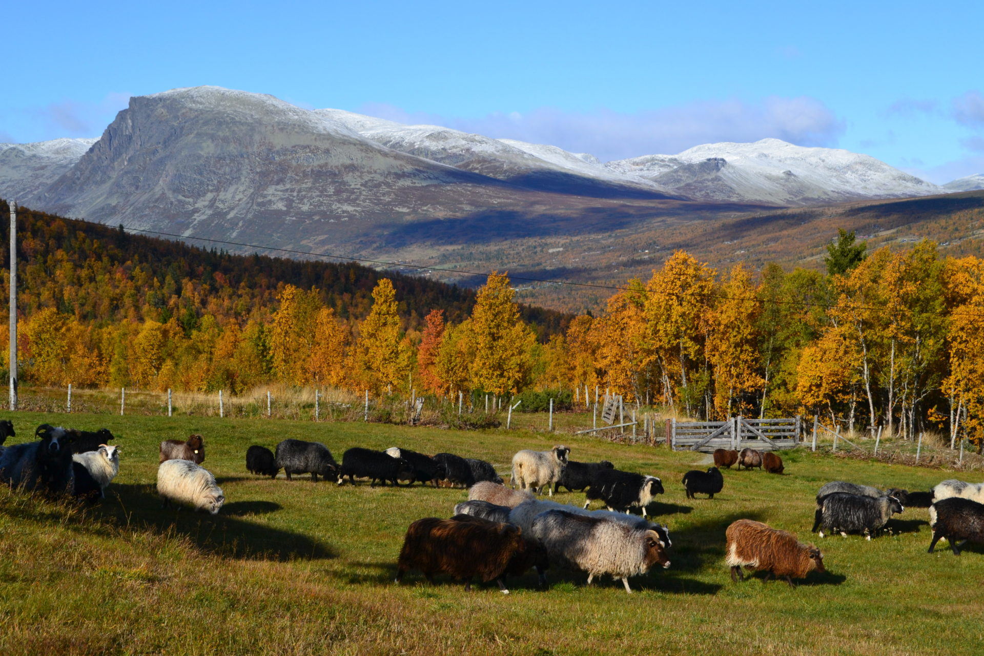 Волонтером на природу Норвегии